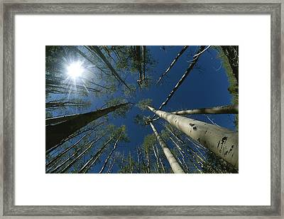 Skyward View Of A Sunburst Framed Print by Raul Touzon