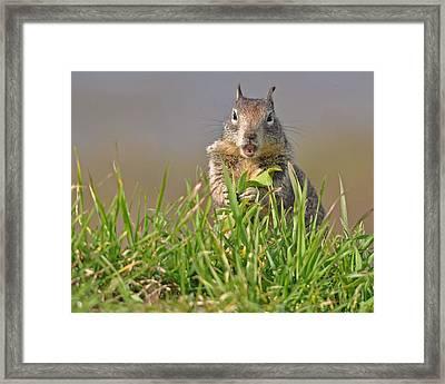 Slack-jawed Squirrel Framed Print