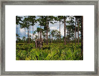 Slash Pine And Saw Palmetto Framed Print by Steven Scott