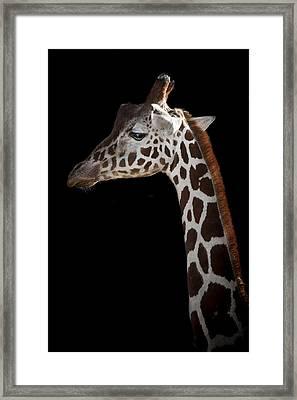 Sleek Framed Print by Paul Neville