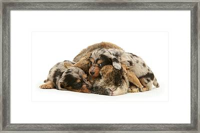 Sleep In Camouflage Framed Print