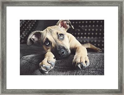 Sleep Puppy Framed Print by Emily Livolsi