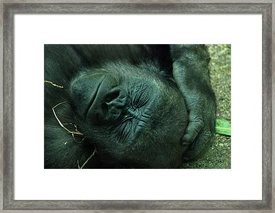 Framed Print featuring the photograph Sleep Tight by Richard Bryce and Family