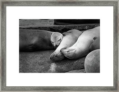 Sleeping Arrangements Framed Print