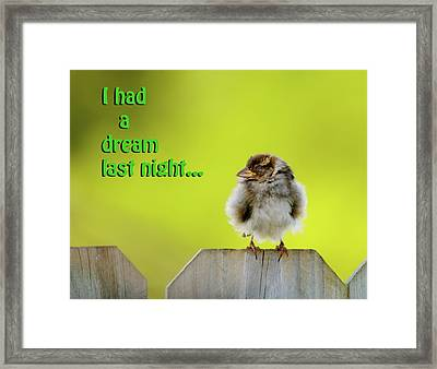 Sleeping Baby Sparrow Framed Print by Betty LaRue