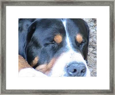 Sleeping Beast Framed Print by Rachel Snell