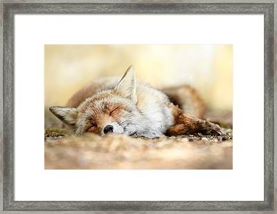 Sleeping Beauty -red Fox In Rest Framed Print by Roeselien Raimond