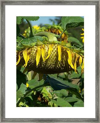 Framed Print featuring the photograph Sleeping Beauty by Sandy Collier