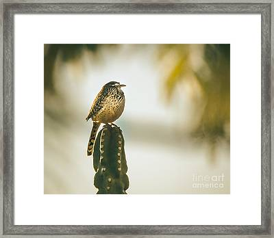 Sleeping Cactus Wren Framed Print