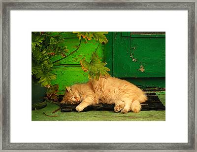 Sleeping Cat Framed Print by Harry Spitz