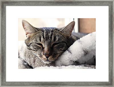 Easy Life Framed Print