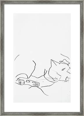 Sleeping Cat II Framed Print