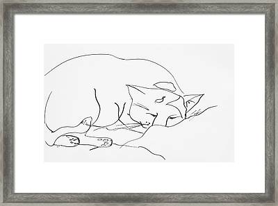 Sleeping Cat Framed Print by Leela Payne