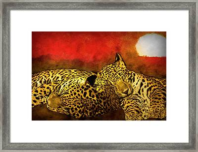 Sleeping Cats Framed Print by Jack Zulli