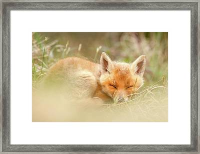 Sleeping Cutie - Red Fox Kit Asleep Framed Print by Roeselien Raimond