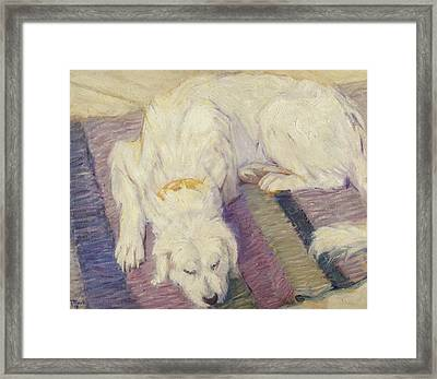 Sleeping Dog Framed Print by Franz Marc