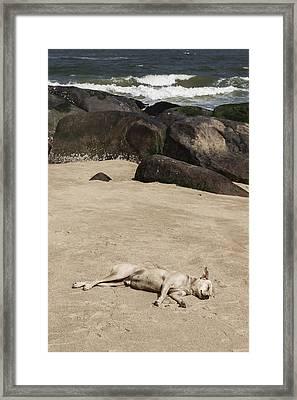 Sleeping Dog Framed Print by Joana Kruse