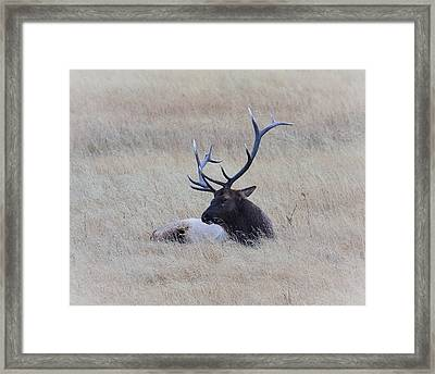 Framed Print featuring the photograph Sleeping Giant by Steve McKinzie