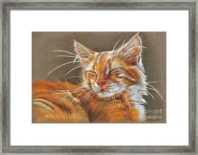 Sleeping Ginger Kitten Cc12-005 Framed Print