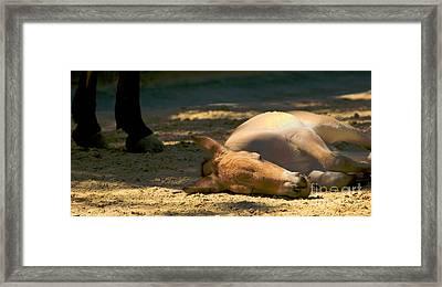Sleeping Horse Framed Print by Louise Fahy