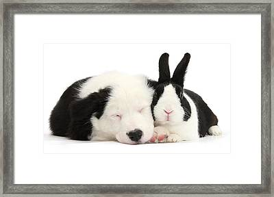 Sleeping In Black And White Framed Print
