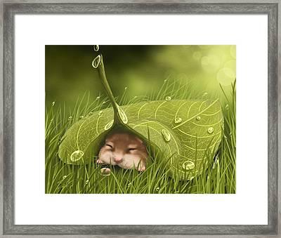 Sleeping In The Rain Framed Print