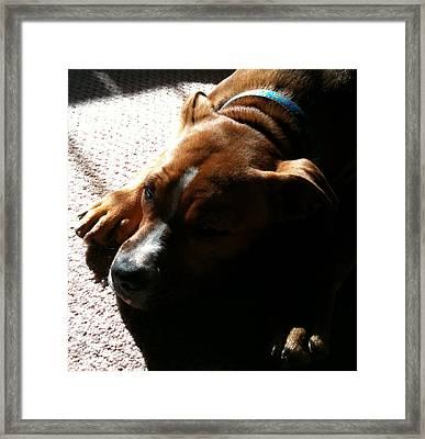 Sleeping In The Sun Framed Print by Debbie Finley