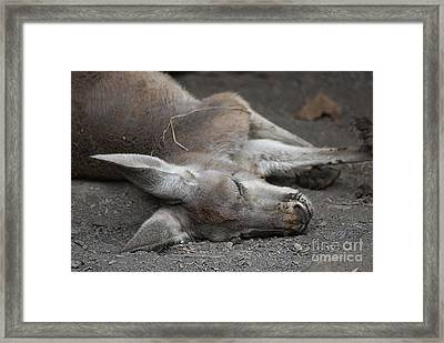 Framed Print featuring the photograph Sleeping Joey 20120714_65a by Tina Hopkins
