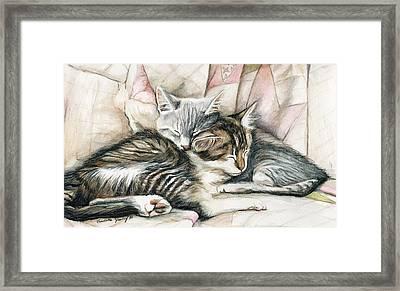 Sleeping Kittens Framed Print by Charlotte Yealey