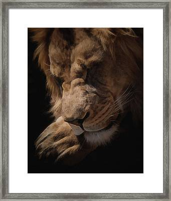 Sleeping Lion Digital Art Framed Print