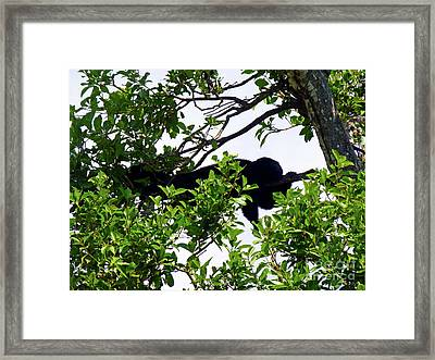Framed Print featuring the photograph Sleeping Monkey by Francesca Mackenney