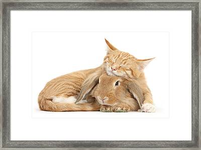 Sleeping On Bun Framed Print