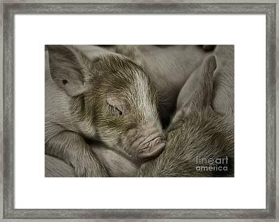 Sleeping Piglet Framed Print