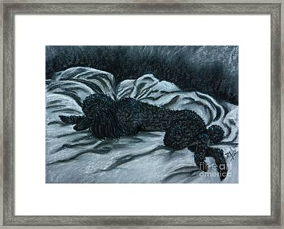 Sleeping Poodle Framed Print