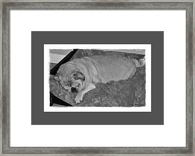 Sleeping Pug In Black And White Framed Print
