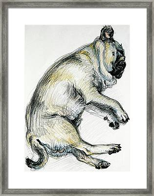 Sleeping Pug One Framed Print by Joan Thewsey