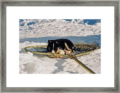 Sleeping Puppy Framed Print by Juergen Weiss