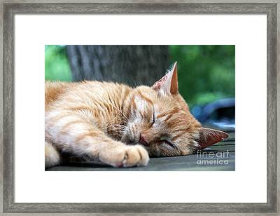 Sleeping Salem Framed Print by Wendy Coulson