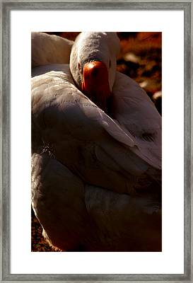 Sleeping Swan Framed Print by LoungeMode Productions