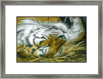 Sleeping Tiger Framed Print