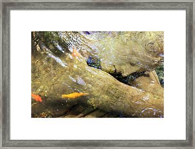 Sleeping Under The Water Framed Print by Munir Alawi