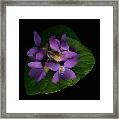 Sleeping Violets Framed Print by Marsha Tudor