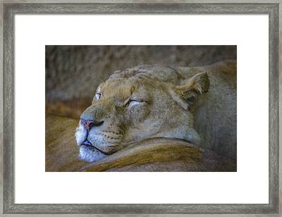 Sleepy. Framed Print