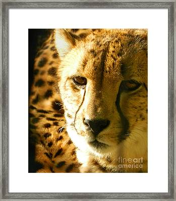 Sleepy Cheetah Cub Framed Print