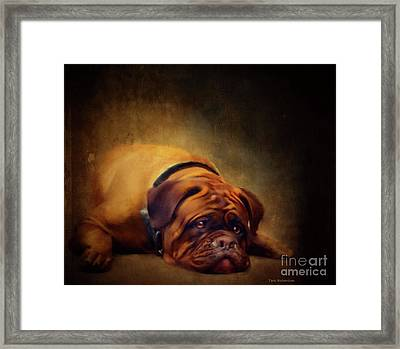 Sleepy Dog Framed Print
