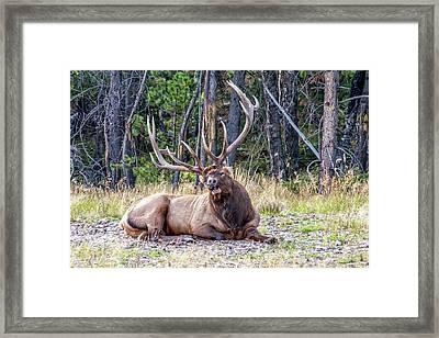 Framed Print featuring the photograph Sleepy Elk 2009 01 by Jim Dollar