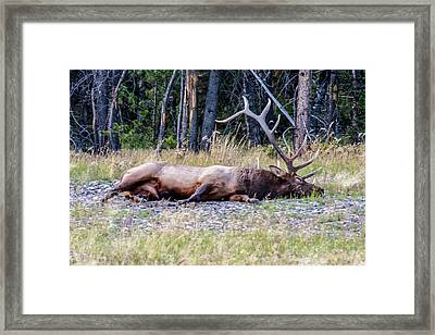 Framed Print featuring the photograph Sleepy Elk 2009 03 by Jim Dollar