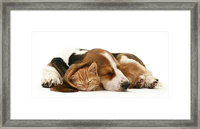 Sleepy Ginger Pals Framed Print