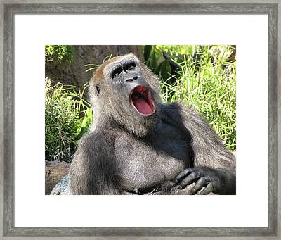 Sleepy Gorilla Framed Print