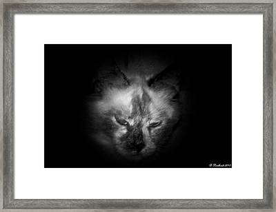 Framed Print featuring the photograph Sleepy Head by Betty Northcutt